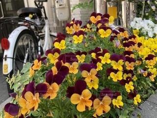 テーブルの上の花の花瓶の写真・画像素材[1175494]