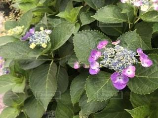 庭の緑の植物のクローズアップの写真・画像素材[2172242]