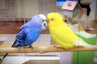 キスしてる鳥の写真・画像素材[959129]