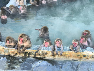 猿温泉の写真・画像素材[984764]