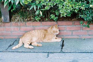 横になっている猫の写真・画像素材[958396]