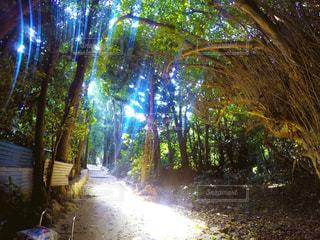 木漏れ日が道を照らしてくれる並木道の写真・画像素材[959110]