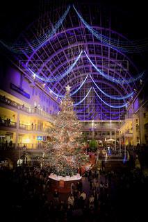 クリスマスツリーの写真・画像素材[959132]