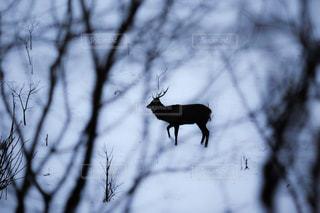 森の中の鹿の写真・画像素材[959138]