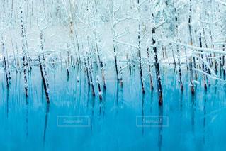 冬の青い池の写真・画像素材[959153]