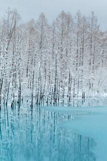 薄氷の張った冬の青い池の写真・画像素材[959585]