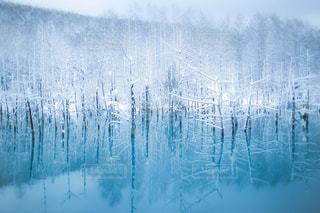 冬の青い池の写真・画像素材[959591]