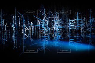 ライトアップされた冬の青い池の写真・画像素材[959599]