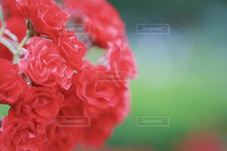 近くの花のアップの写真・画像素材[1232003]