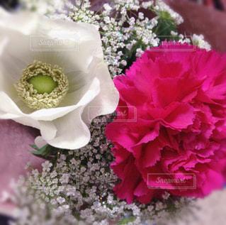 小さい花束の写真・画像素材[959186]