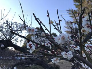 木の枝に花の写真・画像素材[1014445]