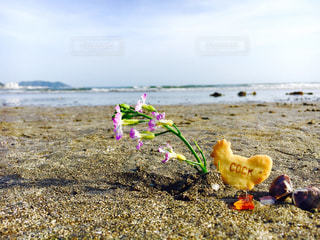 海辺の写真・画像素材[959325]