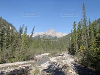 ロッキー山脈の写真・画像素材[959673]