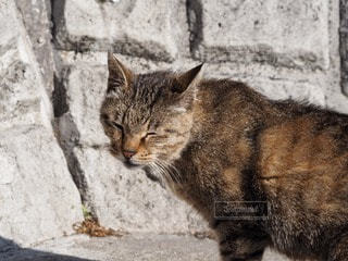 猫の写真・画像素材[31207]