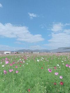 野原の花の写真・画像素材[3514320]