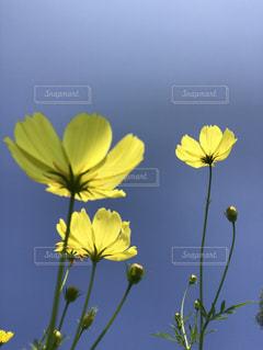 空を目指す花々 - No.960969
