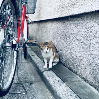 自転車の横に猫の写真・画像素材[970120]