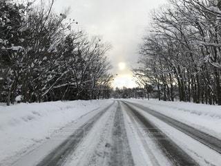 雪の側に木にパスに道が覆われています。 - No.997407