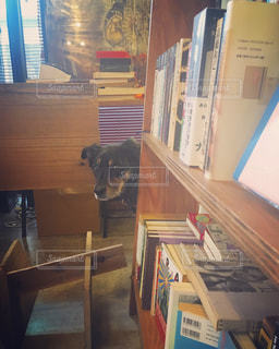 書店の棚の隣に座っている犬 - No.960583