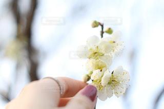 花を持っている手 - No.1059812