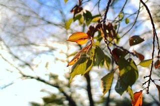 秋の樹木の写真・画像素材[1568678]