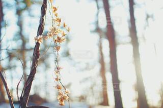近くの木のアップの写真・画像素材[1874581]