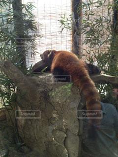 動物園の写真・画像素材[294669]