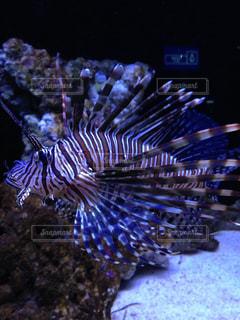 魚の写真・画像素材[294770]