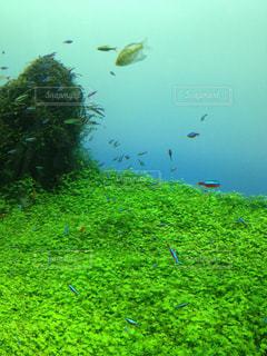 魚の写真・画像素材[294775]