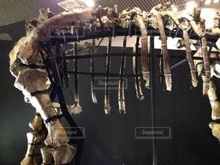 骨の写真・画像素材[294814]