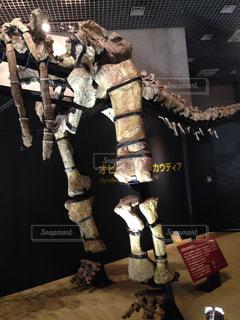 骨の写真・画像素材[294815]