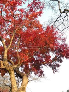 秋の写真・画像素材[294884]