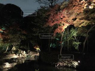 秋の写真・画像素材[295020]