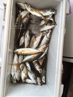 釣りの写真・画像素材[499731]