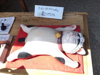猫 - No.499742