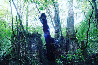 大樹の写真・画像素材[1031775]