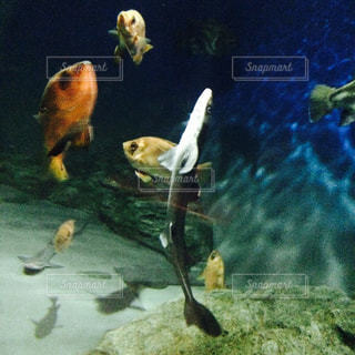 水の中を舞う鮫の写真・画像素材[960928]