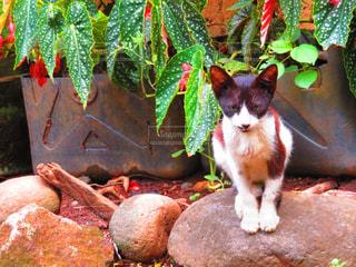 Catの写真・画像素材[960725]