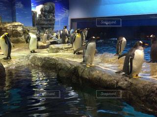 水族館のペンギンたちの写真・画像素材[961861]