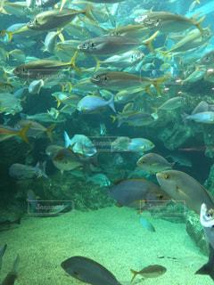水中の魚たちの写真・画像素材[961862]