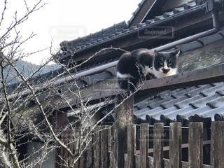 日向ぼっこ中の猫の写真・画像素材[1028964]