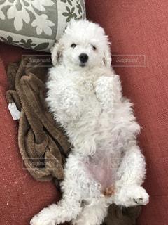 近くに犬のアップの写真・画像素材[961593]