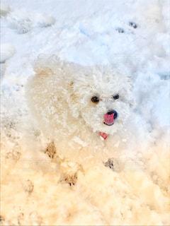大雪!おいしい!楽しい!の写真・画像素材[972540]