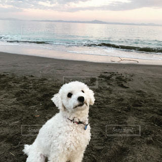 海辺でお散歩の写真・画像素材[1691620]