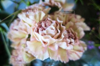 花の写真・画像素材[961966]