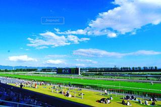 京都競馬場の写真・画像素材[961209]