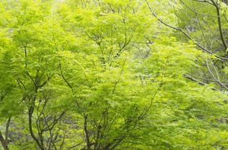 新緑 - No.965081