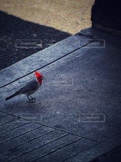 赤が映えるの写真・画像素材[1008270]