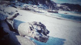雪の砂浜と流木の写真・画像素材[1037095]
