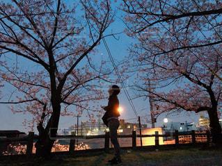 夜桜のジャケ写の写真・画像素材[1102258]